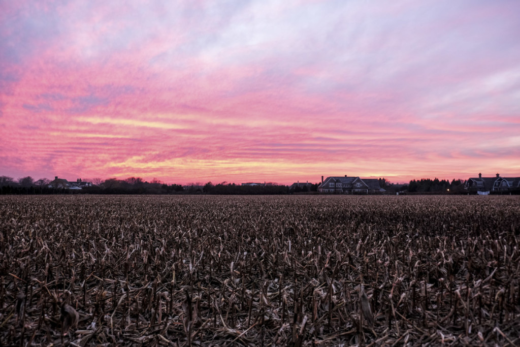 Sunset on Corn Field Southampton Village